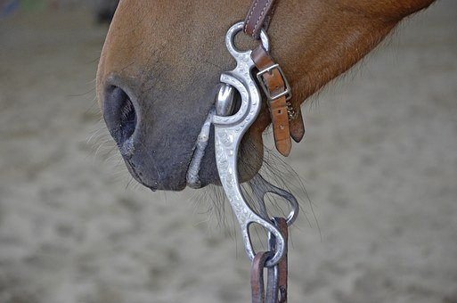 Horse, Bridle, Foot, Brown, Mare, Horse Head