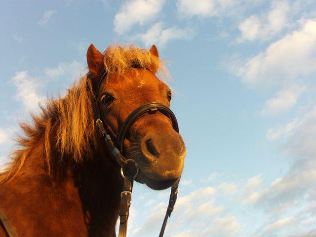 Horse, Pony, Ride, Grass, Female, Mane, Horse Riding