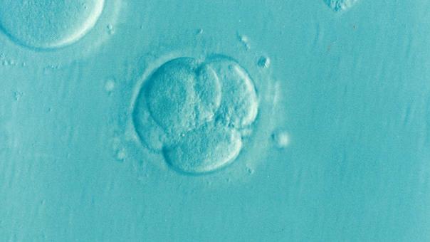 Embryo, Ivf, Icsi, Infertility, Fertility