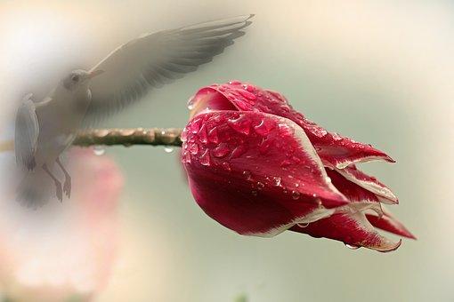 Blossom, Bloom, Plant, Bird, Tulip, Nature, Garden