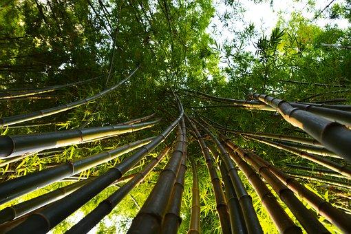 Bamboo, Leaves, Tropical, Shoots, Poles, Green, Summer