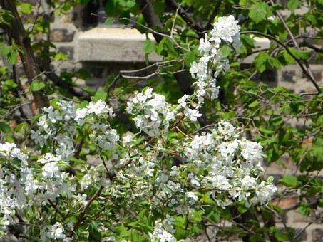 Flowers, Tree, White, Nature, Scenery, Spring, Summer