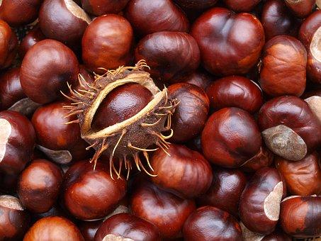 Chestnut, Autumn, Prickly, Tree, Plant, Fruit, Brown