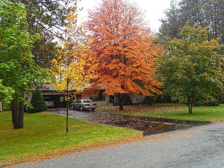 Fall, Front Yard, Orange, Yellow, Foliage, Leaves