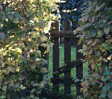 Garden Gate, Hedge, Garden Fence, Border, Gate, Nature