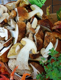 Mushrooms, Autumn, Nature, Forest, Toxic, Moist, Morsch