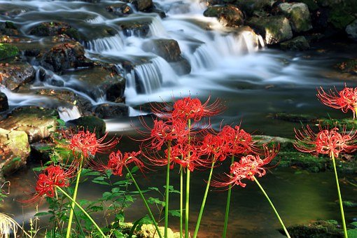 Flowers, Nature, Flowers For, Jeolla-do, Seonunsa