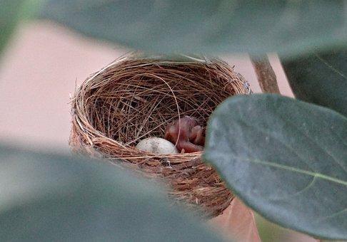 Nest, Chick, Hatched, Egg