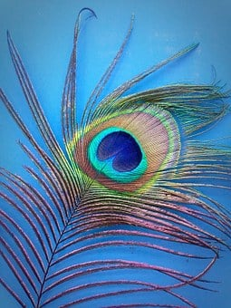 Peacock, Feather, Blue, Green, Bright, Stunning