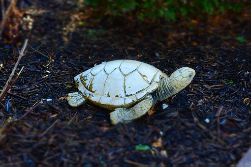 Turtle, Stone, Front Yard, Ornament