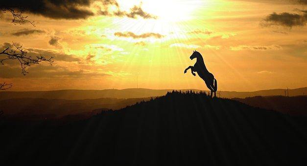 Horse, Animal, Nature, Landscape, Sunbeam, Backlighting
