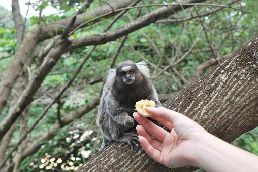 Feeding, Animals, Monkey, Eating, Foods, Black, Mammals