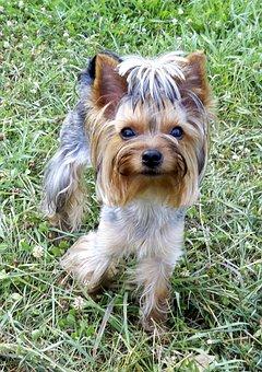 Animals, Dog, Pet, Views, Darling, Cute, Little, Puppy