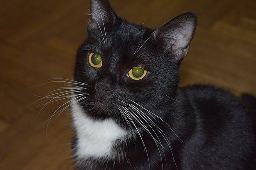 Portrait, Cat, Pet, Cat Person, Animals, Cute, Cats