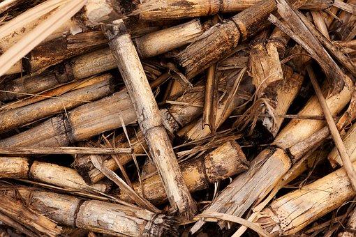 Background, Biomass, Crop, Cut, Harvest, Plant, Stem