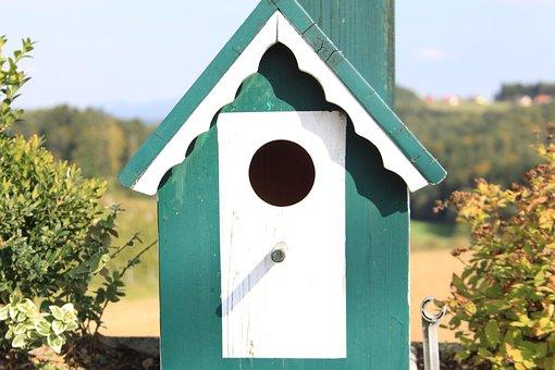 Bird Feeder, Bird, Aviary, Birds, Feed, Green, Winter