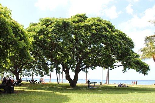 South Island, Hawaii, Big Tree, Summer, Blue Sky
