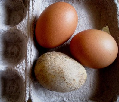 Eggs, Chicken, Stone, Pebble, Egg Shaped, Egg Box