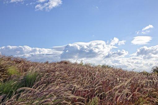Wind, Grasses, Grass, Plant, Nature, Sardinia, Exotic