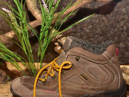 Corn Snake, Hiking Shoes, Hide, Tongue, Snake