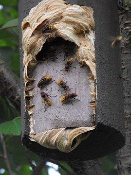 Hornissennest, Nesting Box, Insect
