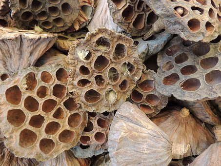 The Hive, Hollow, Hornissennest, Texture
