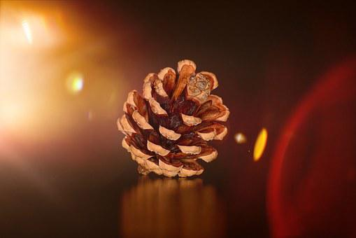 Pine Cones, Natural Product, Light, Lighting, Tap