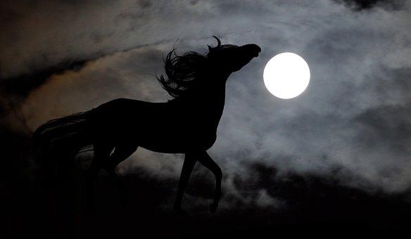 Horse, Arab, Moon, Stallion, Night, Graphics