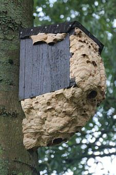 Hornissennest, Insect, Nest, Garden, Rest, The Hive