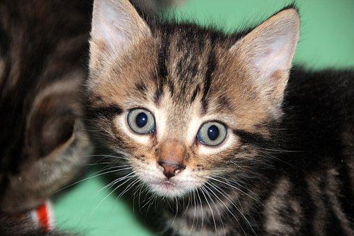 Surprise, Cat, Kitten, Pet, Animals, Cute, Cat's Eye