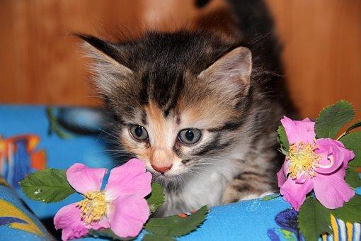 Cat, Kitten, Pet, Animals, Cute, Cat Person, Closeup