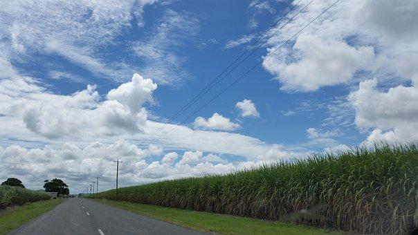 Road, Country, Australia, Rural, Cane Fields, Crop