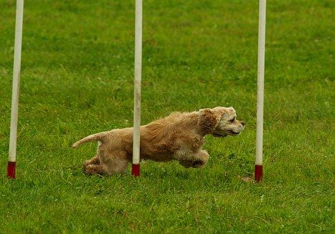 Dog, Agility, Sport, Motion, Pet, Dogsport