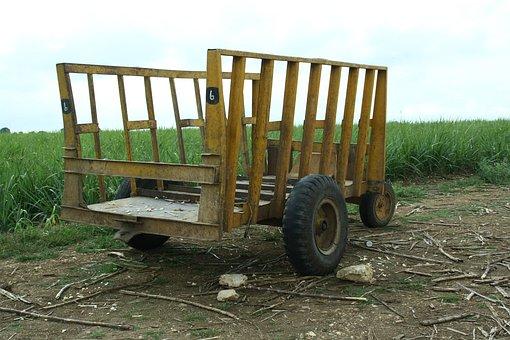 Dare, Stroller, Mature, Sugar Cane, Field, Cart