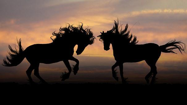 Horses, Sunset, Photoshop, Graphics, Silhouettes