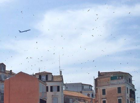 Corfu, Town, Skyline, Old Town, Swallows, Birds, Flying