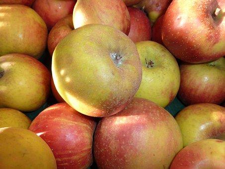 Apple, Boskoop, Apple Variety, Red Boskoop, Fruit