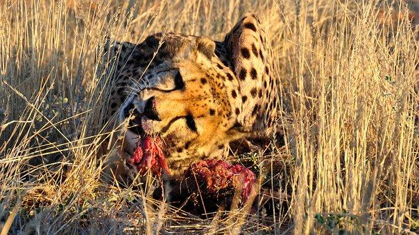 Africa, Namibia, Nature, Dry, National Park, Animal