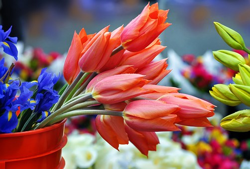 Saturday Market, Tulips, Flowers
