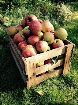 Apple, Harvest, Box, Fruit, Autumn, Fruits, Nature