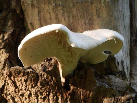 Bract, Fungi, Fungus, Mushroom, Spore