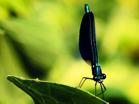 Dragonfly, Bug, Green, Nature, Macro, Sheet, Animals