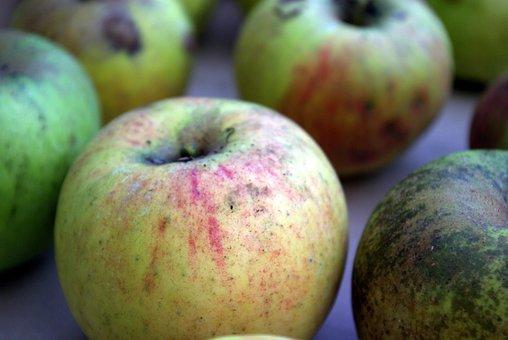 Apple, Boskoop, Harvest, Autumn
