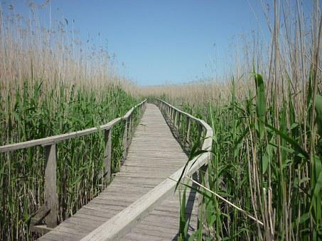 Lake, Reed, Road, Water, Nature, Lake Tisza, Swamp