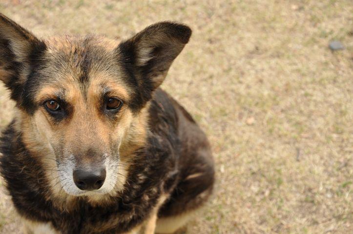 Dog, Puppy, Animals, Portrait, Male, Profile Dog, Look