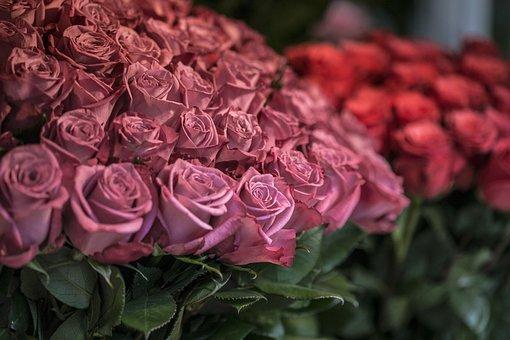 Roses, Flower, Market, Nature, Love, Petal, Floral