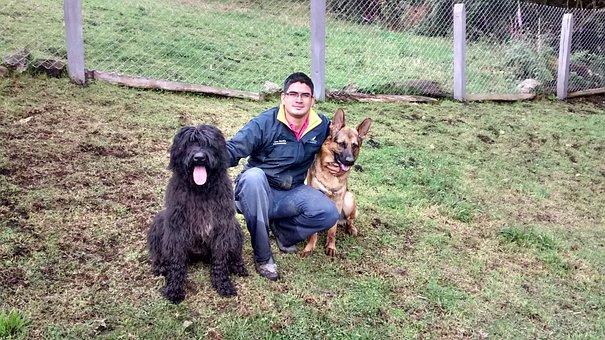 Dog, Labrador, Pet, Sitting Dog, Pet Sitting