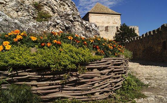 Castle, Sümeg, Hungary, Flower, Flower Bed, Plant
