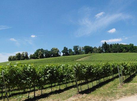 Vineyard, Vines, Winegrowing, Wine, Odenwald, Sunny