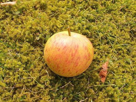 Fruit, Apple, Boskop, Vitamins, Healthy, Apple Pie